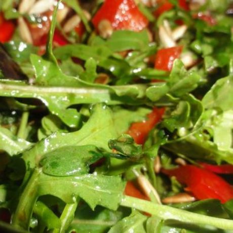 Salata od rikule
